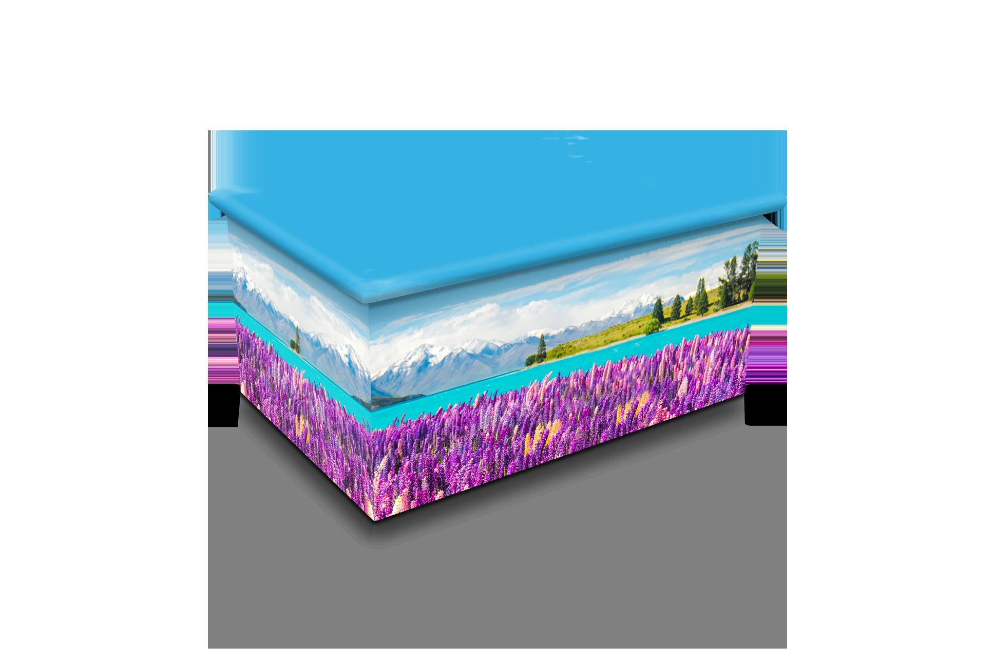 Flowering Lupins